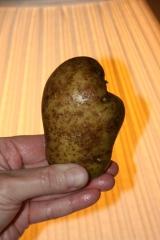 michigan-potato